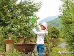 铜陵盆景栽出致富路 年销售额600余万元