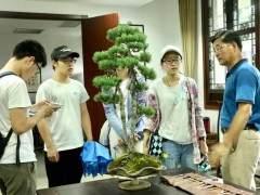 瘦西湖扬派盆景博物馆火热一夏