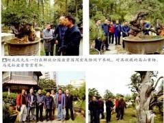 本人对武汉盆景快速发展的态势感触很深