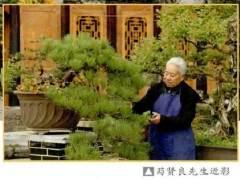 在贵州盆景界 提起萄红籽 那可是鼎鼎有名