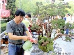在山水盆景的创作上 李云龙是走树石结合的路子