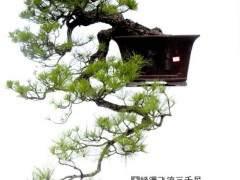 昌恩盆景艺术园位于武汉园博园中心
