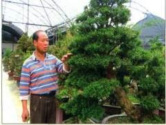 武夷山盆景园创建于1997年 座落在建瓯市