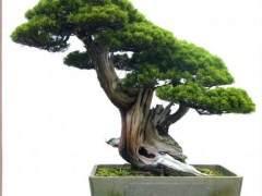 台州梁园:国内最早高高品质的私家盆景园