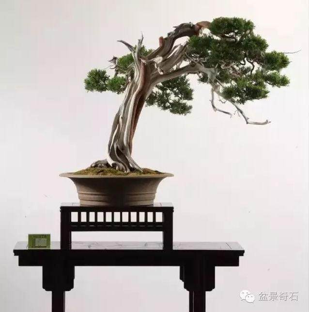 常州随园:中国最大的私人盆景园