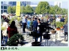 2016中原盆景艺术展在洛阳栾川展出