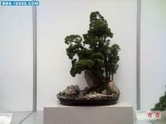 上海市盆景赏石协会副会长兼秘书长程小华