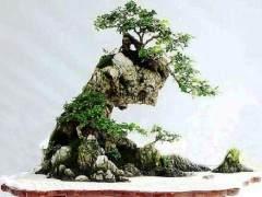 水旱盆景的分类与式样