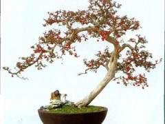 香港盆景雅石学会永远名誉会长 -- 吴成发