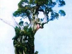 日本岩崎大藏先生的原生真柏盆景