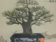 60年代 广州文化局曾经举办过盆景展览