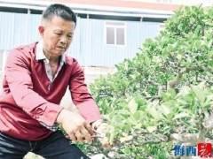 柯成昆:闽派盆景是一生的守护和传承