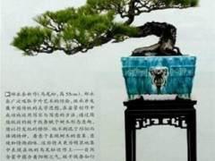 记中国盆景艺术大师郑永泰