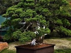 台湾西周公园举办盆景展