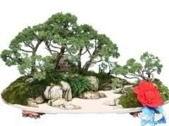 盆景怎么构图的8个表现方式 图片