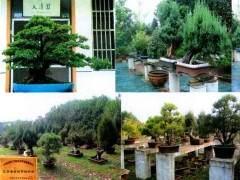 华东花木城有限公司与常州盆景协会签订协议