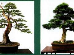 中国唐苑盆景园承办的首届中国唐风盆景展
