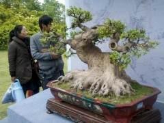 赵庆泉大师喜获扬州市园林局特殊贡献奖