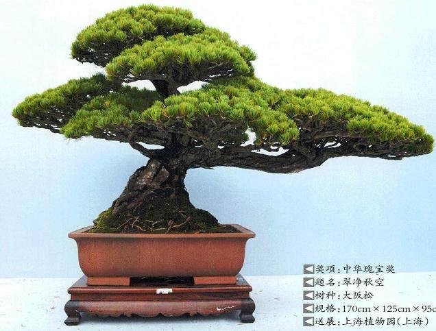 第九届中国盆景展览暨首届国际盆景协会