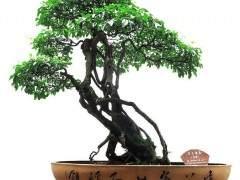 读2010《花木盆景》盆景赏石版第七期人物栏目