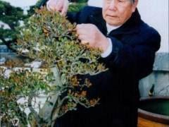 泉州公园举行中国杂木盆景研讨会