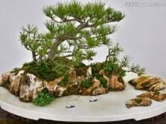 山水盆景作为中国盆景艺术的一个品类