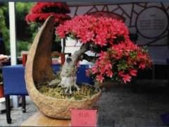 古塔花韵杜鹃盆景展在上海方塔公园成功举办