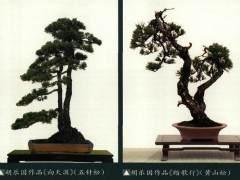 《胡乐国盆景作品》书日前由浙江大学出版社出版发行