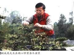 柯成昆先生成为厦门市盆景花卉协会新一任会长后