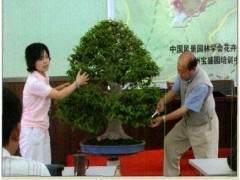 首届中国盆景高级研修班第二班在常州宝盛园举办