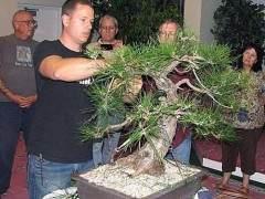 美国国家植物园举办年度波托马克盆景协会春季秀