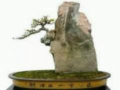 附石盆景如何固定石头 图片