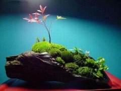 制作苔藓怎么减缓盆景土壤中水分的蒸发