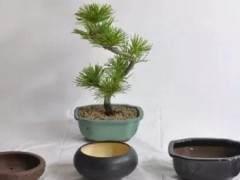 微型盆景怎么移栽换盆的方法