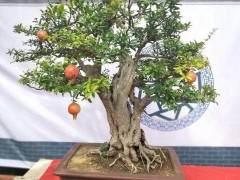 河南省平顶山市鲁山县盆景协会成立