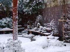 如何做好冬季盆景的养护工作