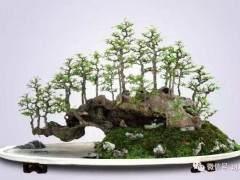 海南博兰盆景多次在国际大赛中获得重要奖项