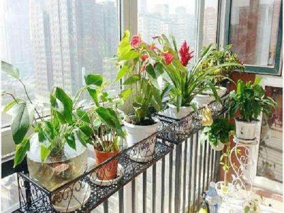 阳台盆景在夏季的修剪管理