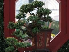 我多年种植盆景树让我意识到自然界中的许多事物