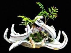 以正式方式展示盆景树与盆景本身一样具有艺术形式