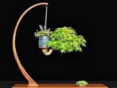 盆景展示桌用于突出树的重要性 就像一个盆子
