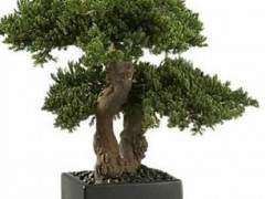 """多年来 有许多人造盆景树作为""""笑话""""礼物"""