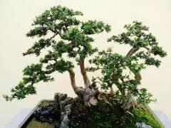 我们的盆景钳由日本的大师级艺术家手工制作