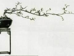 """第一次听盆友称我的盆景为""""素仁格""""大约是1983年"""