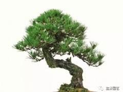 上海春季拍摄——盆景精品赏析