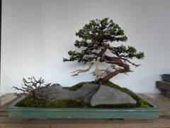 对中国盆景艺术的鉴赏总结