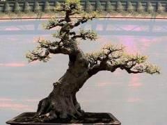 访问陈村花卉世界的岭南盆景之家