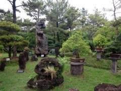 访问韩国济州岛盆景艺术苑