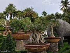 亚热带盆景的浇水施肥与修剪