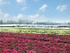 随着天气转暖,各类草花盆景也迎来销售旺季